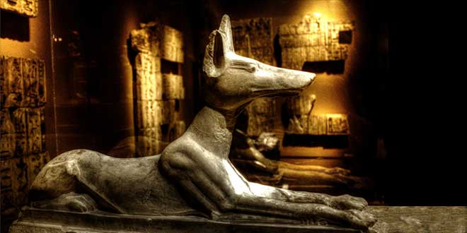 Photo of Anubis